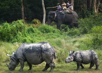 Chitwan-Jungle-Safari-Rhino
